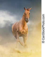 schöne , kastanie, pferd