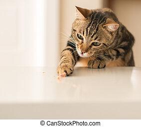 schöne , katzenartig, einheimische katze, animal., home.
