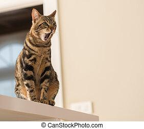 schöne , katzenartig, einheimische katze, tier, home.