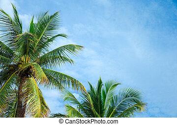 schöne, kokosnuss, Bäume, tropische, Handfläche, hintergrund