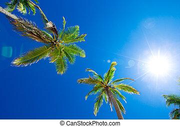 schöne , kokosnuss, bäume, tropische , handfläche, hintergrund