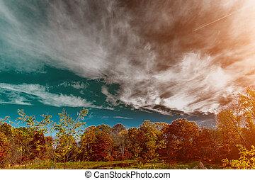schöne , landschaft., autumn., see, bäume, leaves., gelber , banken, wachsen, wald