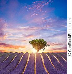 schöne , landschaftsbild, von, blühen, blaßlila feld