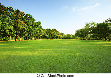 schöne , licht, park, morgen, feld, grünes gras, öffentlichkeit
