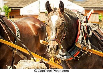 schöne , linse, pferd, schauen, geschirr