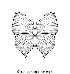 schöne , monochrom, weißes, schwarz, butterfly.