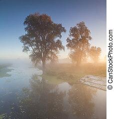 schöne , morgen, river., klein, nebel, landschaftsbild