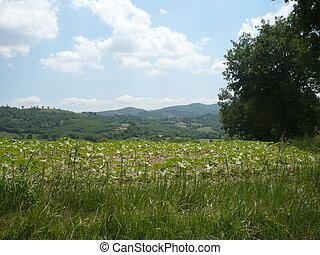 schöne , natürlich, landschaftsbild, in, der, sommer, time., ansicht, von, landwirtschaftliche felder
