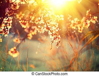 schöne , naturszene, mit, blühen, baum, und, sonne leuchtsignal