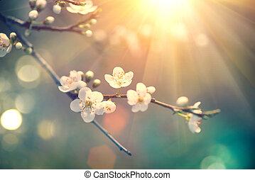 schöne , naturszene, mit, blühen, baum, und, sonne...