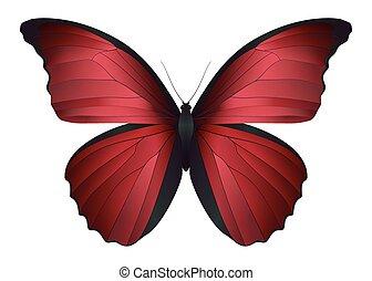 schöne , papillon, weißes, freigestellt, hintergrund