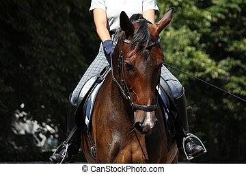 schöne , pferd, bucht, zaum, porträt, sport
