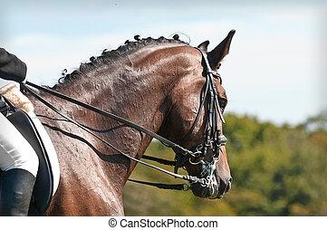 schöne , pferd, sport, dressage