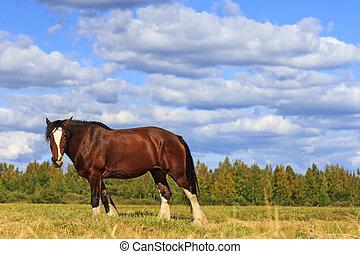 schöne , pferd, unter, szenerie