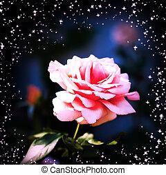 schöne , pink stieg, in, a, kleingarten