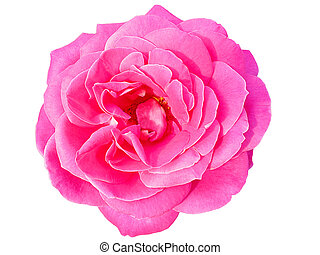 schöne , pink stieg