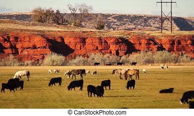 schöne, ranch, Bauernhoftiere, USA, Wyoming, thermopolis,...