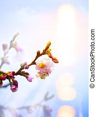 schöne, Rosa, Blüte, Fruehjahr, Abstrakt, hintergrund