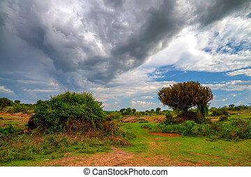 schöne , savanne, afrikas