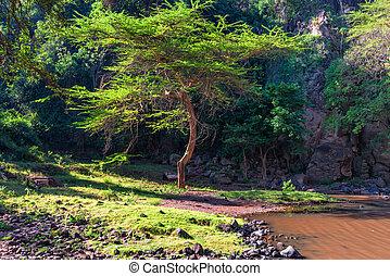 schöne , savanne, ansicht, natur