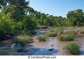 schöne , savanne, bewässerung, ort, fluß