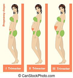 schöne, schwanger, frau, Stadien, Schwangerschaft