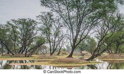 schöne , see, in, der, keolado, nationalpark, indien