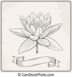schöne , skizze, flower., abbildung, hand, wasser, vektor, hintergrund, gezeichnet, lilie