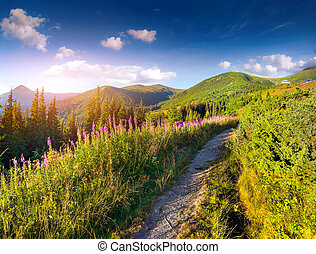 schöne , sommerlandschaft, bergen, mit, rosa, flowers.
