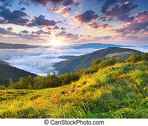 schöne , sommerlandschaft, in, der, berge., sonnenaufgang