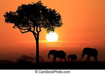 stockbild von silhouette sonnenuntergang elefanten serengetti csp5187586 suche nach. Black Bedroom Furniture Sets. Home Design Ideas