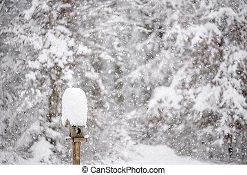 schöne , stehende , winter hölzern, kappe, -, schneien szene, groß, zubringerlinie, vogel, kleingarten