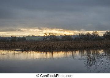 schöne , sumpfgebiete, winter, aus, see, spät, sonnenuntergang, landschaftsbild