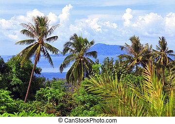 schöne , tropische landschaft