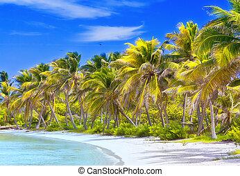 schöne , tropischer strand