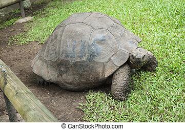 schöne , turtle, beilage, ihr