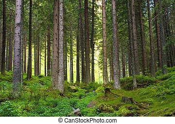 schöne , wälder, magisches