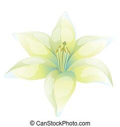 schöne , weiße lilie, hintergrund, abbildung