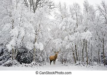 stockbild von sch ne winter festliche jahreszeit hirsch schnee csp43848869 suche nach. Black Bedroom Furniture Sets. Home Design Ideas