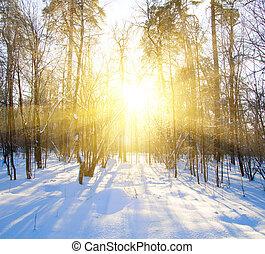 schöne , winter, sonnenuntergang, mit, bäume, in, schnee
