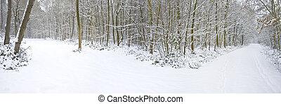 schöne , winter, wald, schneien szene, mit, tief, reiner schnee, und, pfad, spaltung, in, zwei, richtungen
