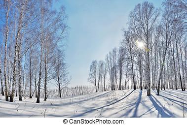 schöne , winterlandschaft, mit, helle sonne, und, schatten,...