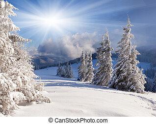 schöne , winterlandschaft, mit, schneebedeckte , bäume.