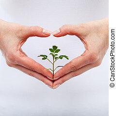 schützen, liebe, natur