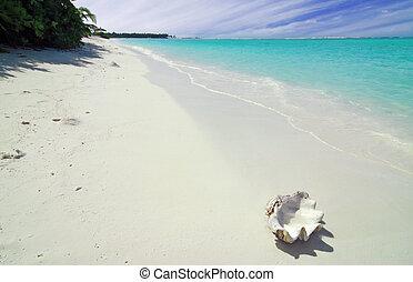 schaal, en, strand