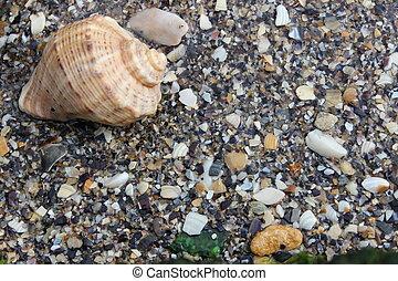 schaal, in het zand