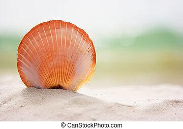 schaal, op, zand