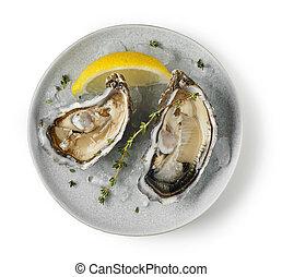 schaaltje, witte , oesters, achtergrond, fris