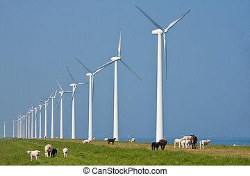 schaap, groot, windturbines, zee, hollandse, voorkant,...