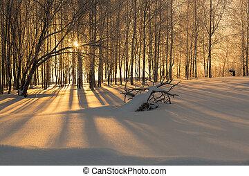 schaduwen, lang, sneeuw, bomen